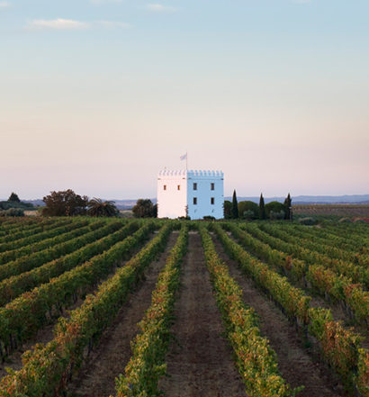 Discover the wines Cover Image