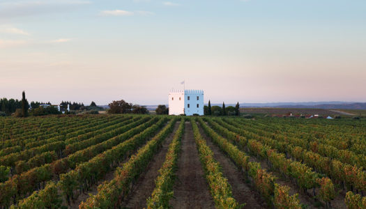 Discover the wines of Alentejo