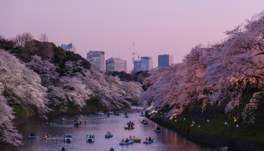An insider's guide to Tokyo